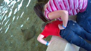 Our mini vaca in STL. Touching & feeding sting rays at STL Zoo