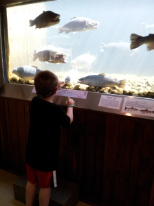 Lucas looking at the different trout in the aquarium